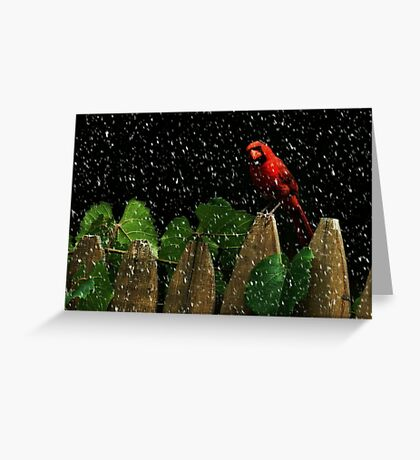 Male Cardinal Stare (snow effect) Greeting Card