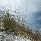 Sand, Wind and Reeds II - Clearwater Beach, FL by Danielle Ducrest