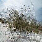 Sand, Wind and Reeds III - Clearwater Beach, FL by Danielle Ducrest