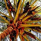 Beneath Coconut Palms by marinar