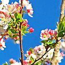 Spring Flowering by marinar