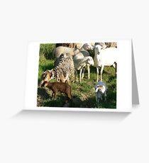 Coloured Sheep Greeting Card