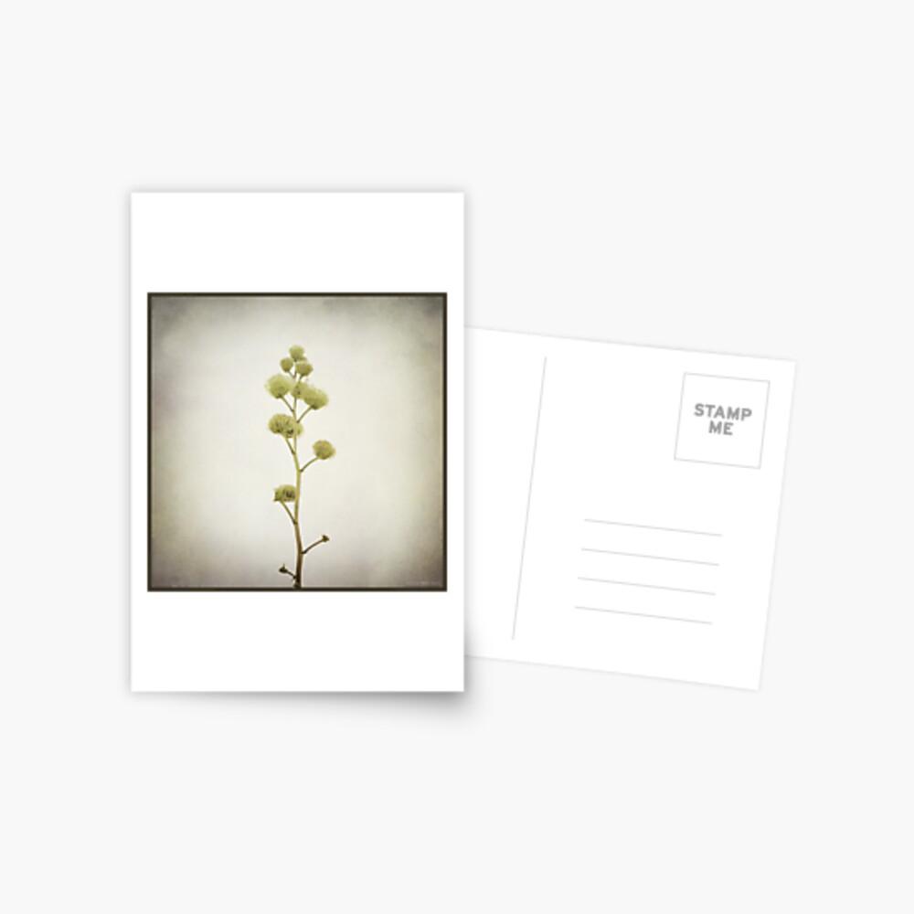 o n e Postcard