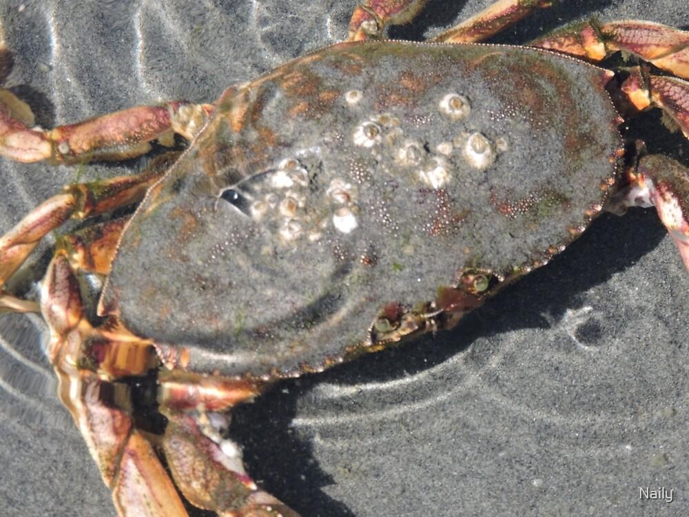 Crab  by Naily