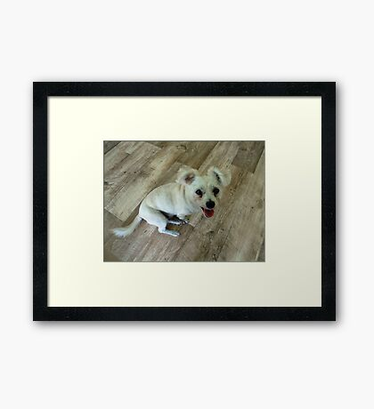 My Doggy Visitor Framed Print
