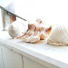 Seashells On The Windowsill by minikin