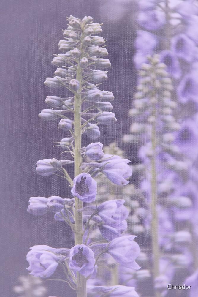 Lavender Delphinium by Chrisdor