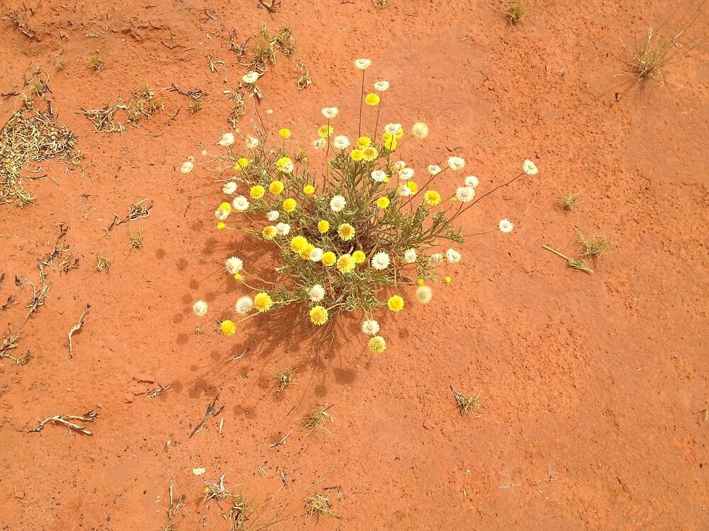 desert blooms by megandarrart