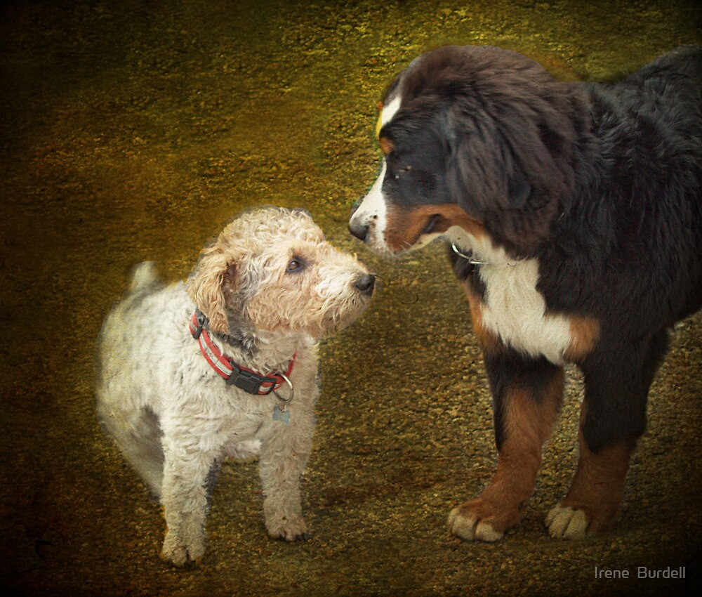 You may be bigger than me , But...... by Irene  Burdell