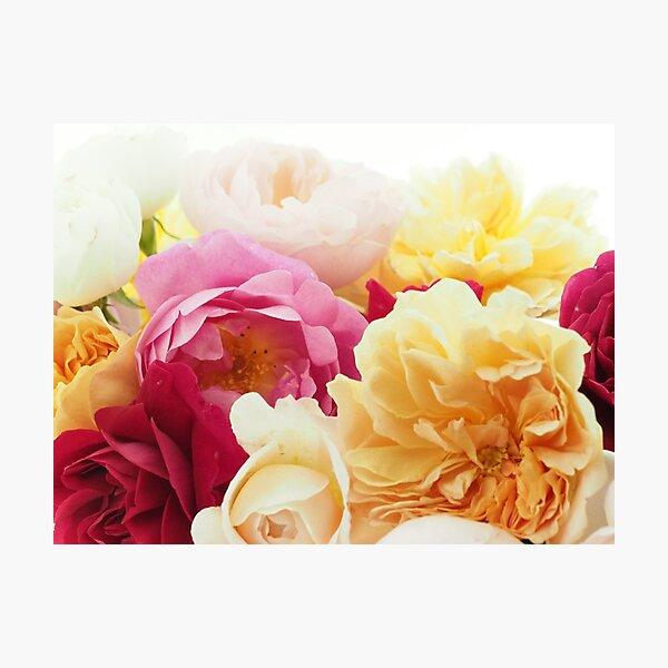 Rose Fever No.6 Photographic Print