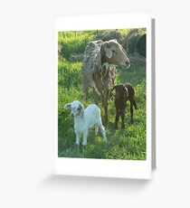 Coloured Ewe & Twins Greeting Card