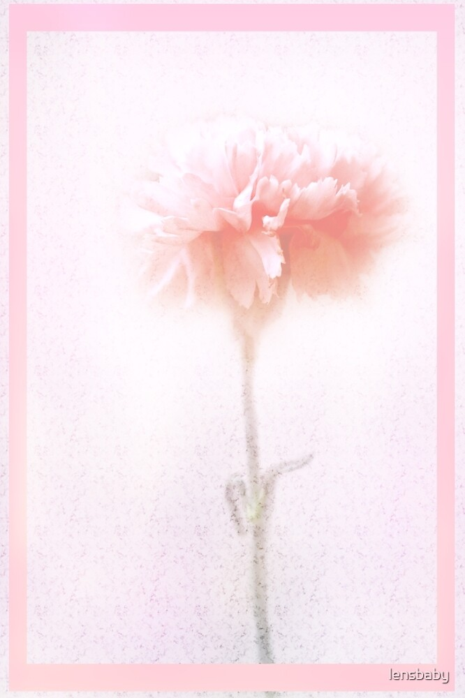 pink carnation by lensbaby