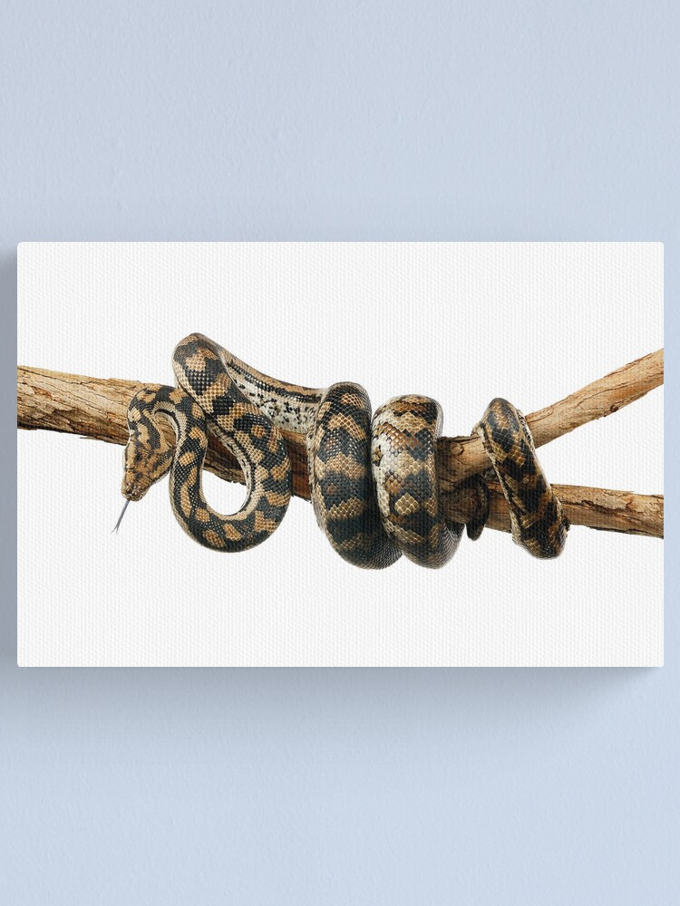 Alternate view of Gammon Ranges Carpet Python (Morelia spilota ssp.) Canvas Print