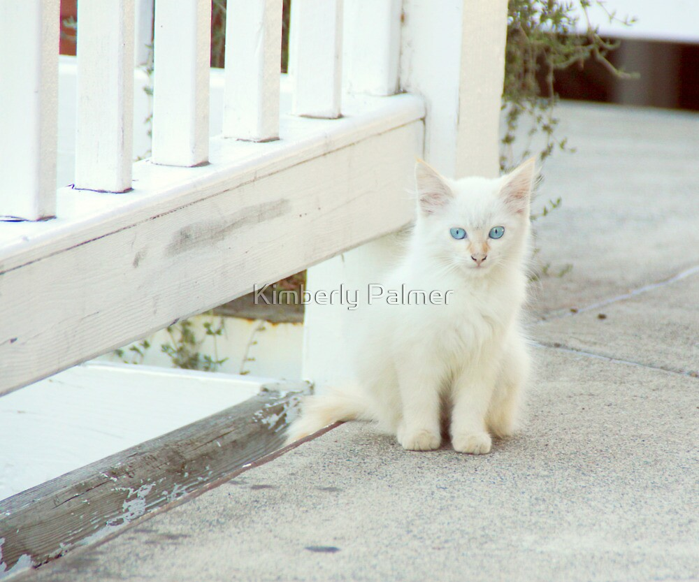 blue-eyed kitten by Kimberly Palmer