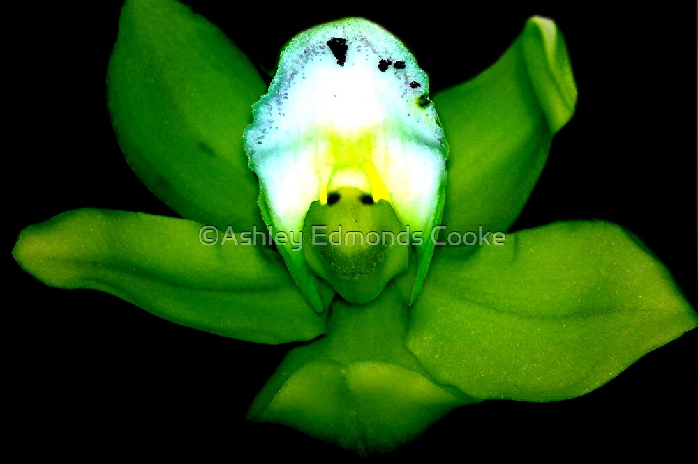 Kermie Baby: Alien Discovery: A New Perspective on Orchid Life by Ashley Cooke
