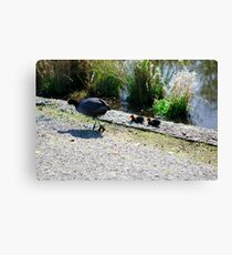 The Coot Family Canvas Print