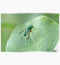 Green metallic fly on leaf Poster