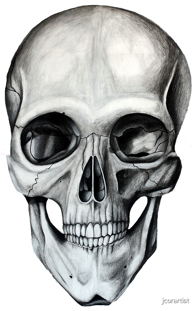 Charcoal Skull by jcorartist