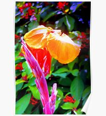Flower spike and bloom Poster