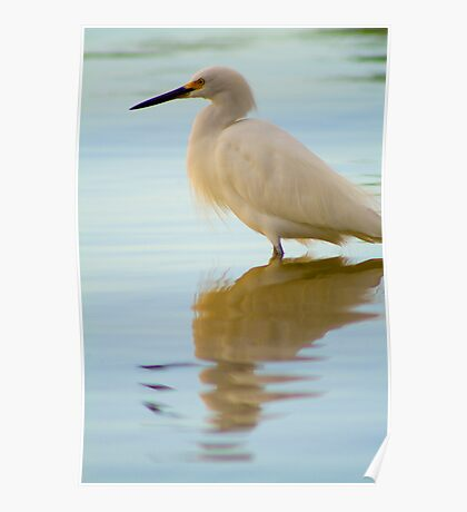"""""""Snowy Spectacle"""" - snowy egret near Port Canaveral, Florida Poster"""