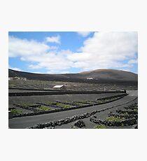 Vineyards in Lanzarote Photographic Print