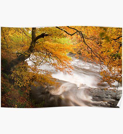 River Isla near Alyth (viewed 100 times) Poster