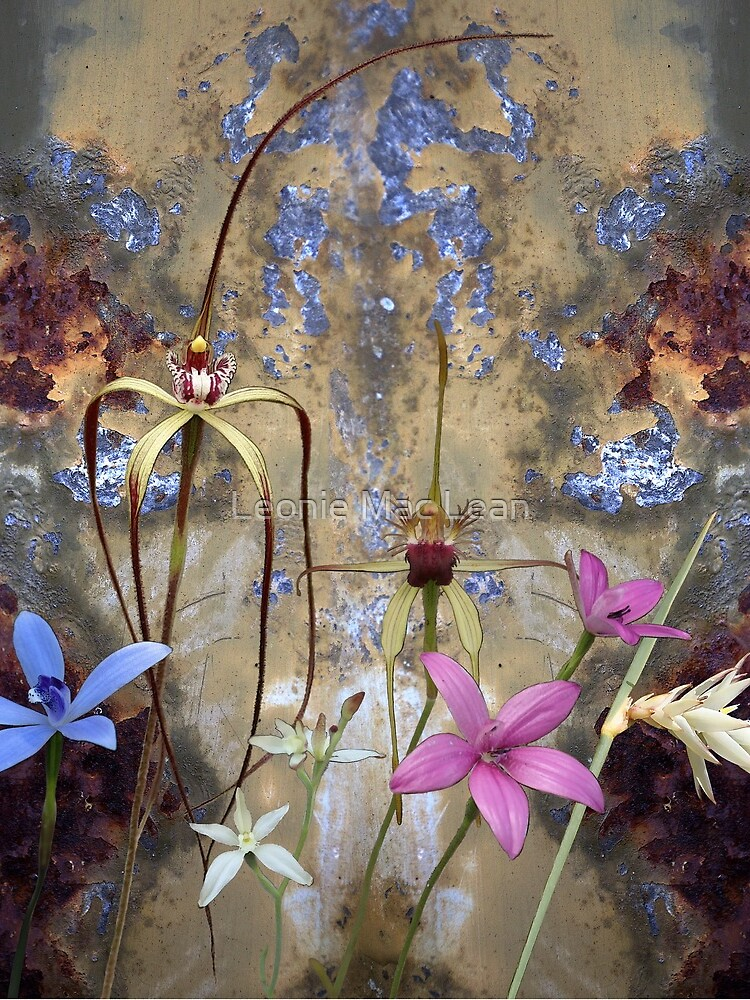 Silky Blue & Orchids with Blue Rusty Metal, native orchids of Western Australia. by yallmia
