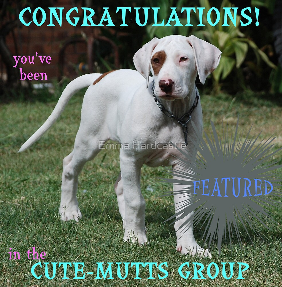 Feature Banner - Cute Mutts by Emma Hardcastle