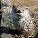 Portrait of an Otter by Alison M