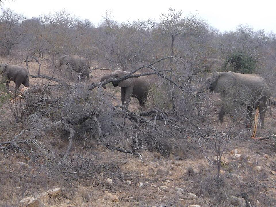 Elephant Herd, Limpopo, South Africa by sbrosszell