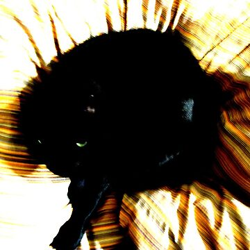 Lucky Black Cat by Issy262