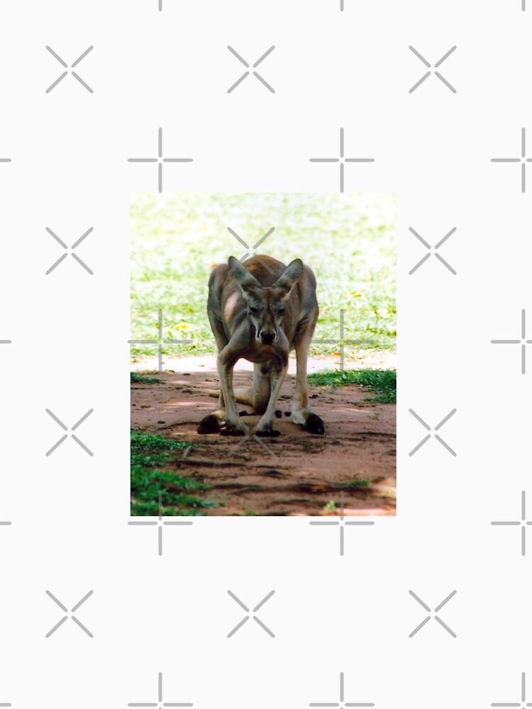 Kangaroo by STHogan