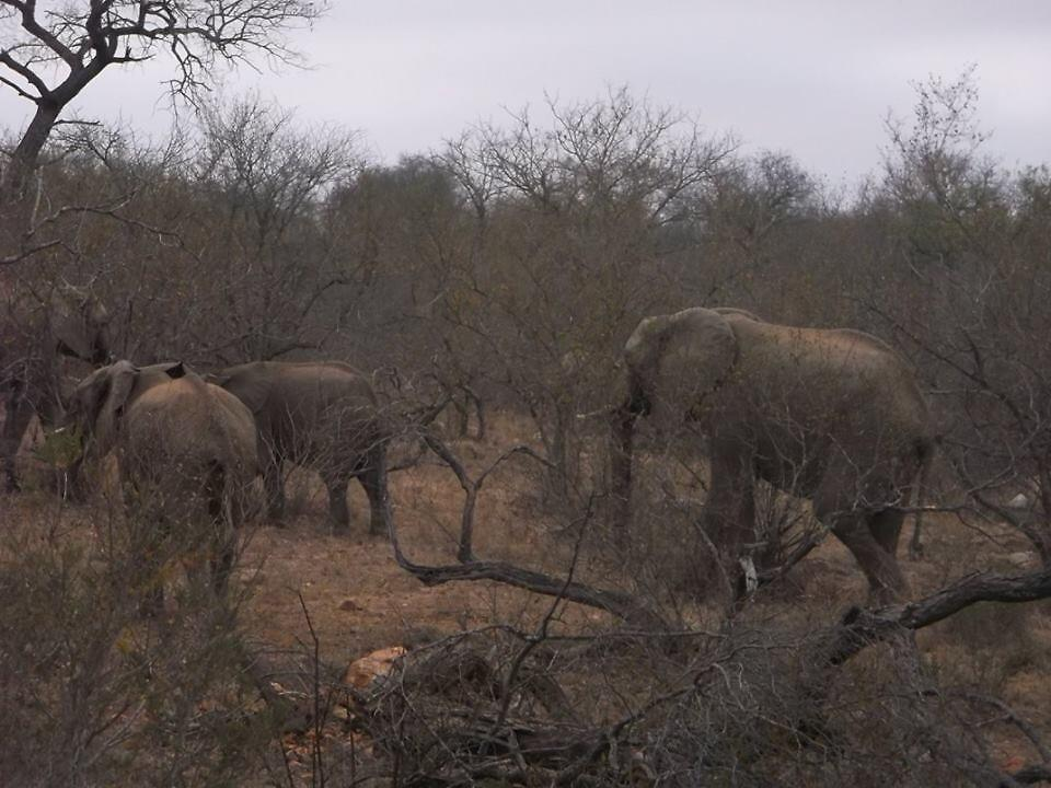 Elephant Herd 2, Limpopo, South Africa by sbrosszell