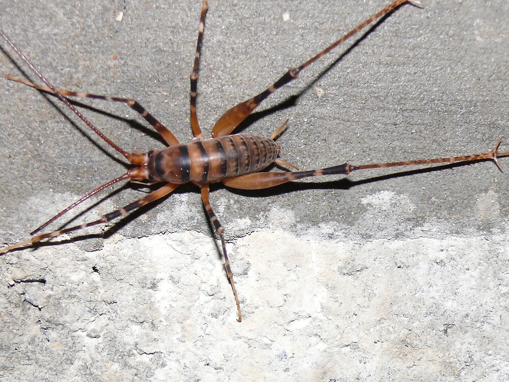 Cave Weta by wgtonlifeart