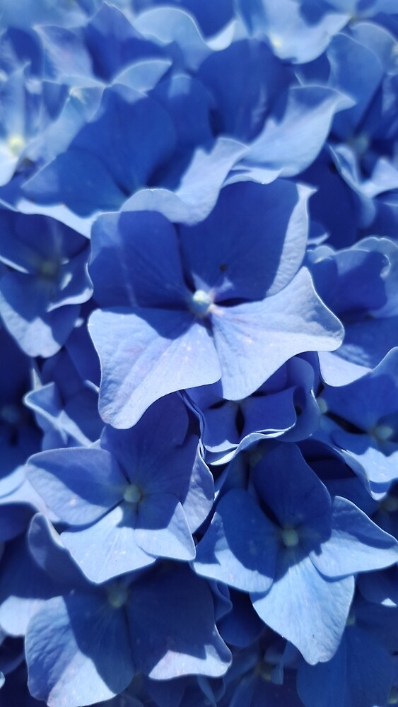 Electric Blue Hydrangea by 4ayesha