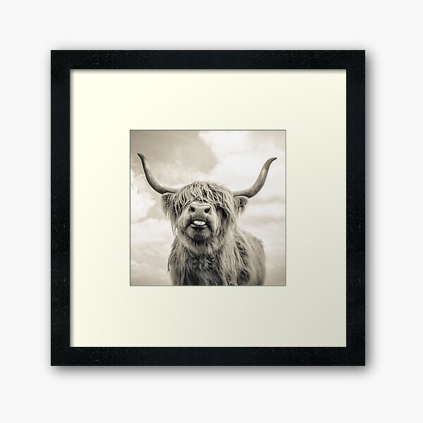 Cheeky Highland Cow  Framed Art Print