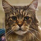 The Maine Kat!  by Heather Friedman