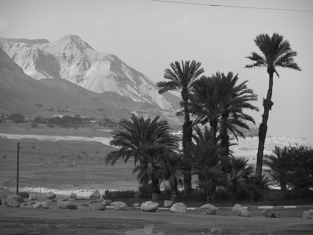 Palm Trees and Mountains by Adam Isaacson