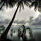 Palms by jason owens