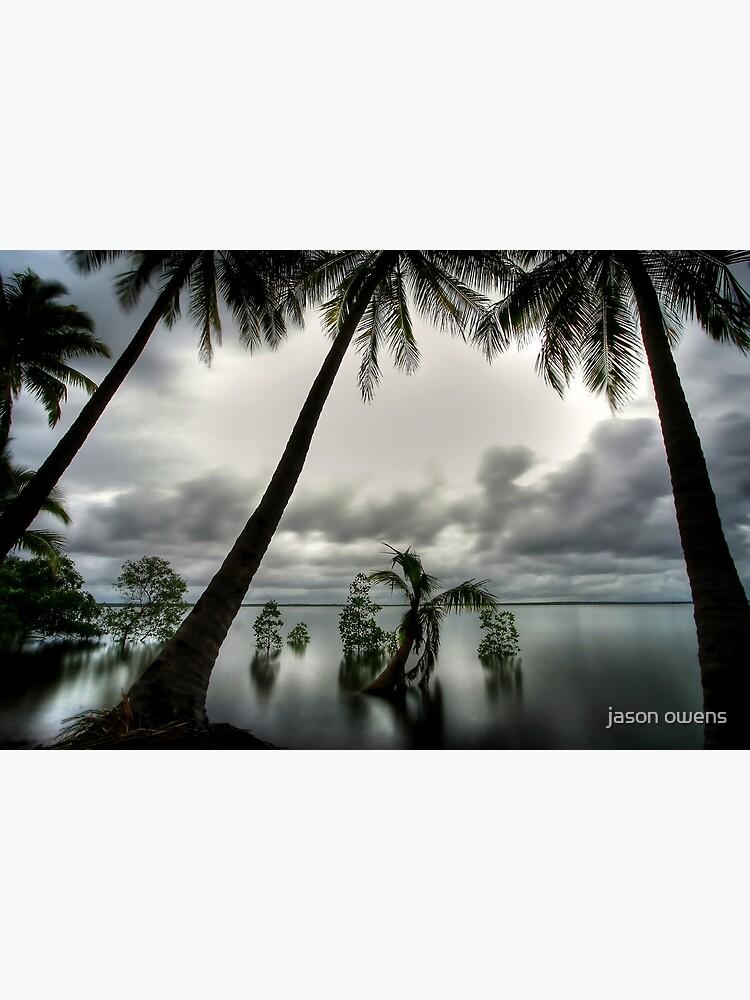 Palms by owey