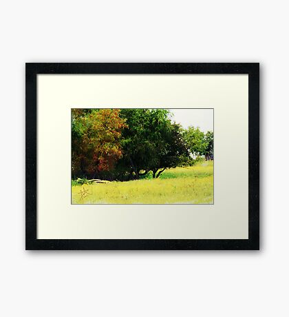 Country Flowers Framed Print