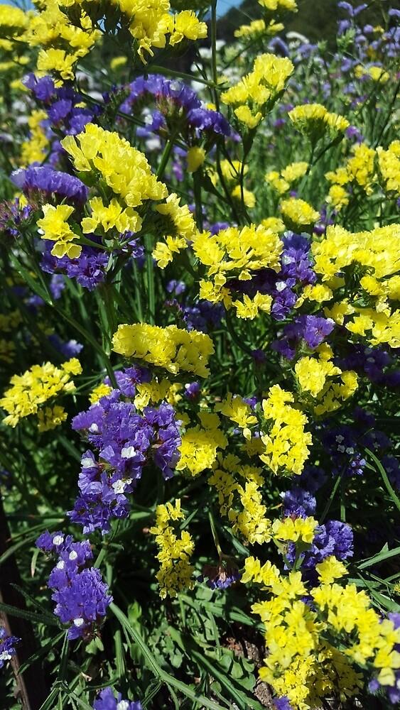 Purple & Yellow, Purple & Yellow by 4ayesha