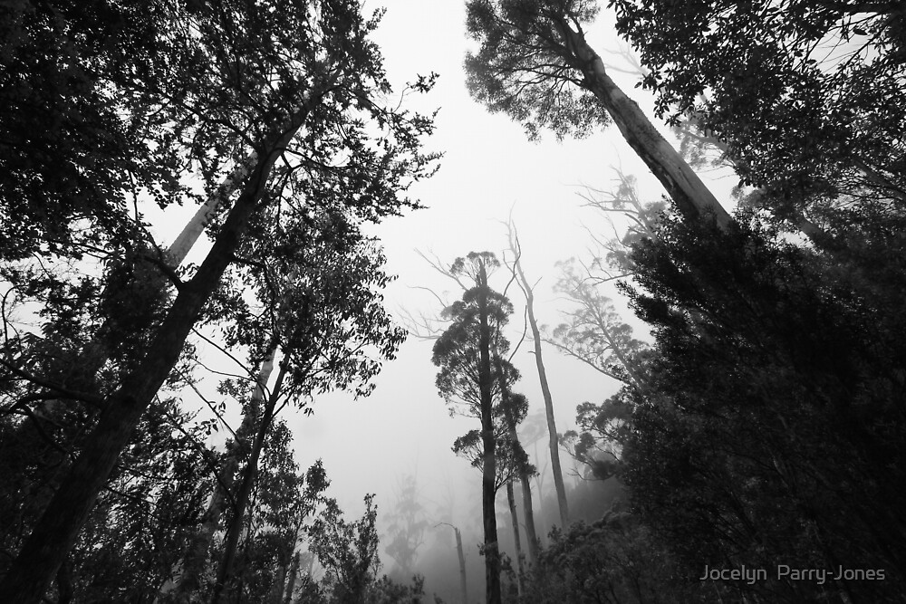 Walk with me, into the forest by Jocelyn  Parry-Jones