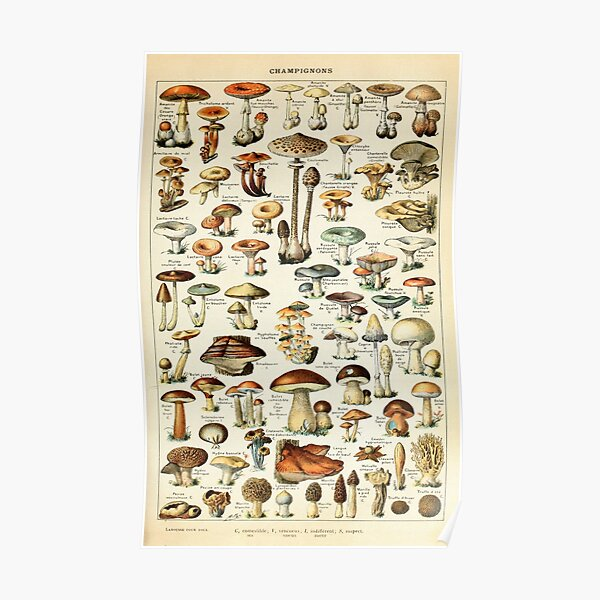 Champignon I Vintage French Mushroom Chart by Adolphe Millot Poster