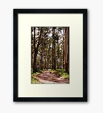 Dandenong Ranges National Park - Mountain Ash Framed Print