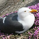 Alcatraz Seagull by Jodi Webb