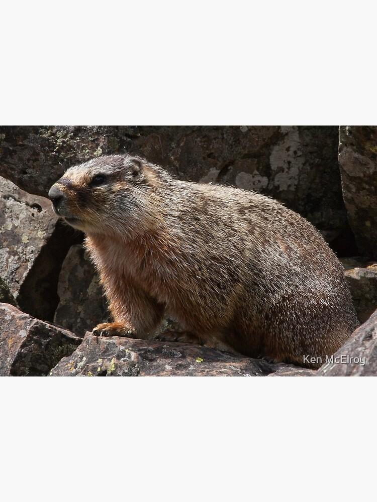 Meet Mr. Marmot by mcvette