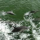 Dolphins at play by JuliaKHarwood