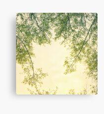 Spring foliage No. 2 Canvas Print