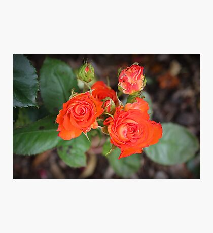 Orange Beauty Photographic Print
